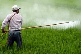 This is a picture of Roundup in use that symbolizes a Roundup lawsuit lawyer.